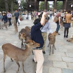 2013年奈良と言えば鹿